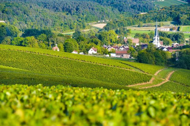 Região de Champagne, Vinhedos