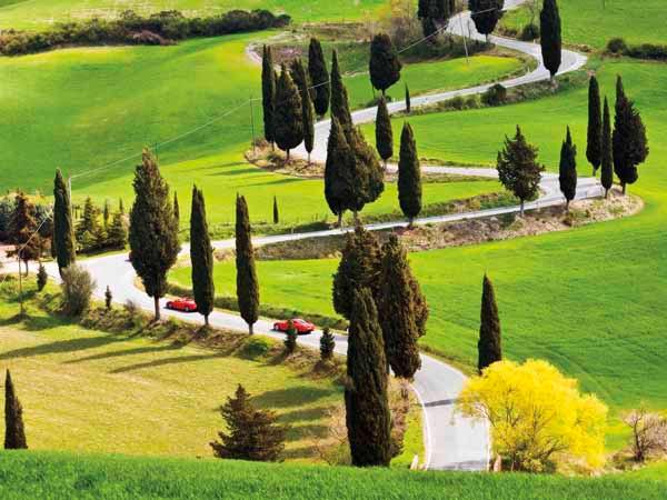 Toscana e  Ciprestes