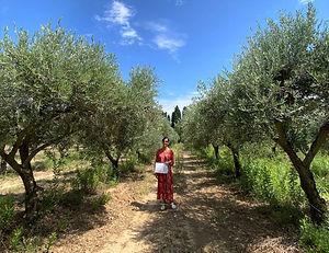 Le moulin de fabi oliviers .jpg