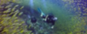 carangue, plongée d'exploration, Koh Phi Phi