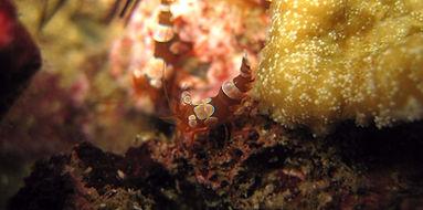crevettes sexy | Koh Phi Phi, Thailane