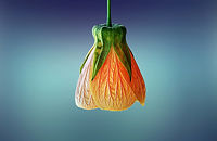 fleur orange forfait stylisme