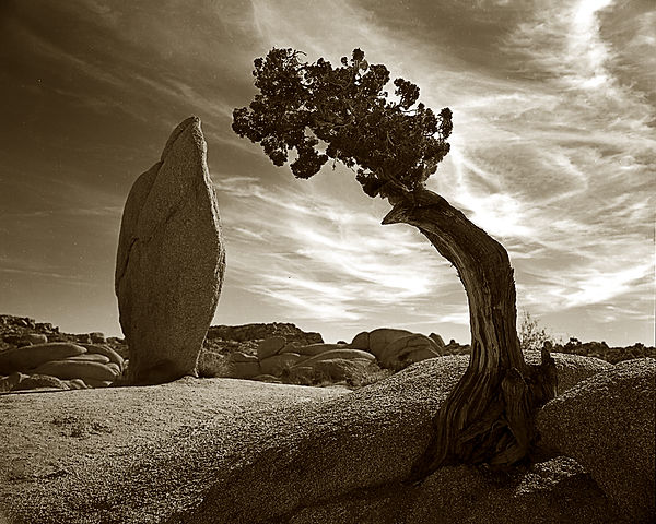 ericbryan_balanced-rock-and-juniper.jpg