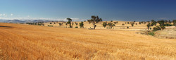 Landscape-AgBanner-CDaviesF[1].jpg
