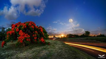 Flamboyant lune.jpg