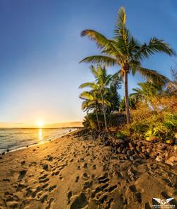 Cocotiers de la Réunion