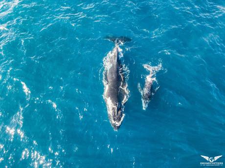 baleines2.jpg