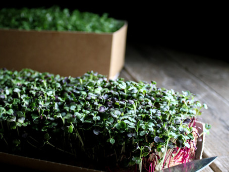 Microgreens - What are they?
