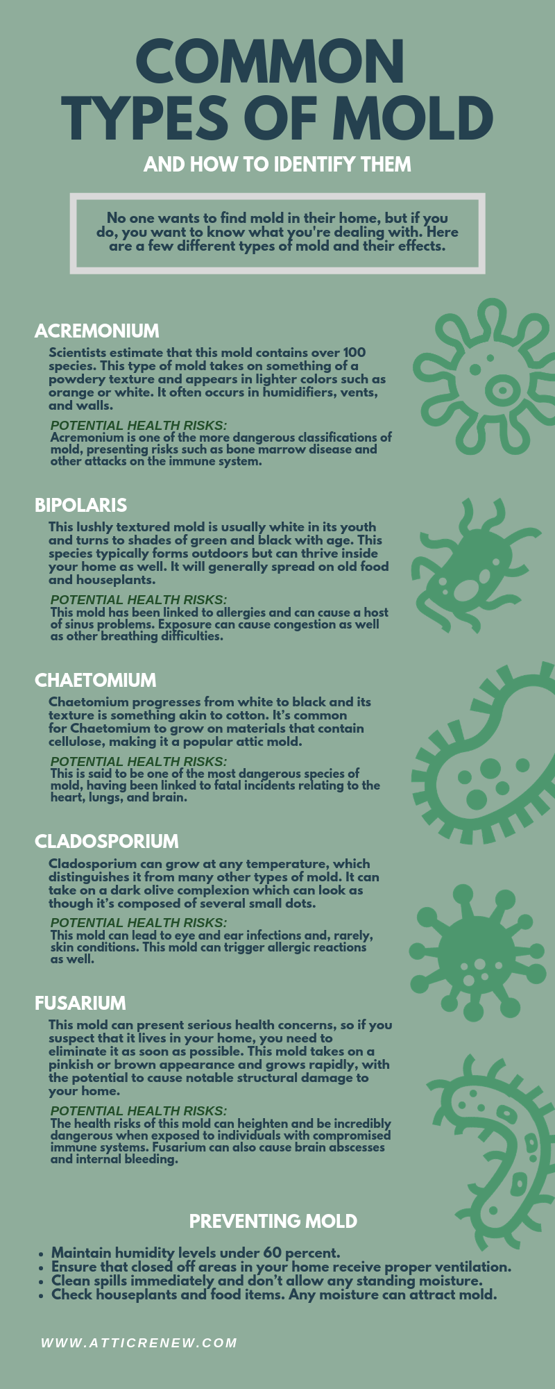 Common Types of Mold and How to Identify Them infographic