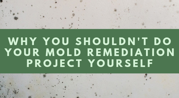 Why You Shouldn't Do Your Mold Remediation Project Yourself