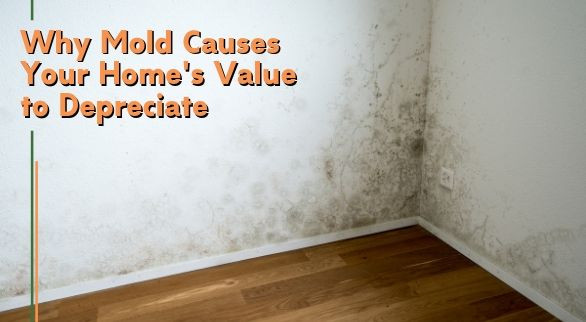 Why Mold Causes Your Home's Value to Depreciate