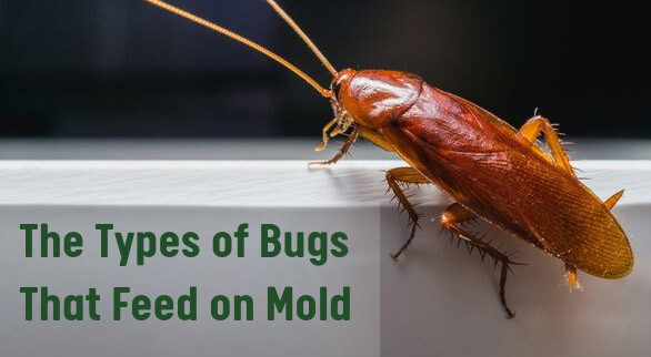 The Types of Bugs That Feed on Mold