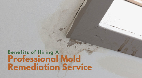 Benefits of Hiring A Professional Mold Remediation Service