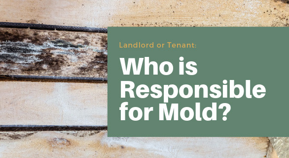 Landlord or Tenant: Who is Responsible for Mold?