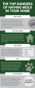 top dangers of having mold in your home infographic