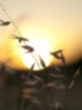 bokeh_sunset-1525066.jpg