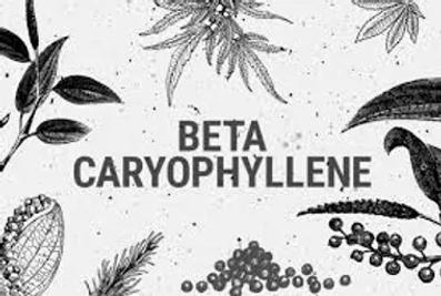 CARYOPHYLLENE_jfif.webp