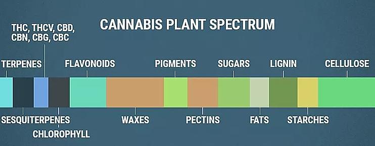 CANNABIS PLANT SPECRUM FLAVONOIDE.webp