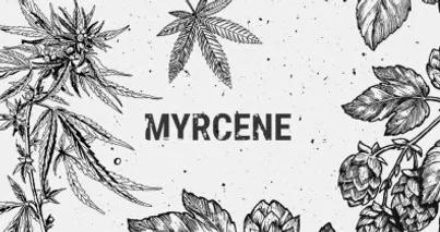 MYCRENE
