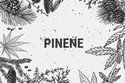 PINENE FLAVONOID.webp