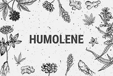 Humolene