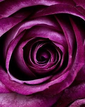 rose féminin sacré.jpg