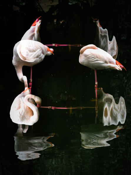 Flamingoswirl