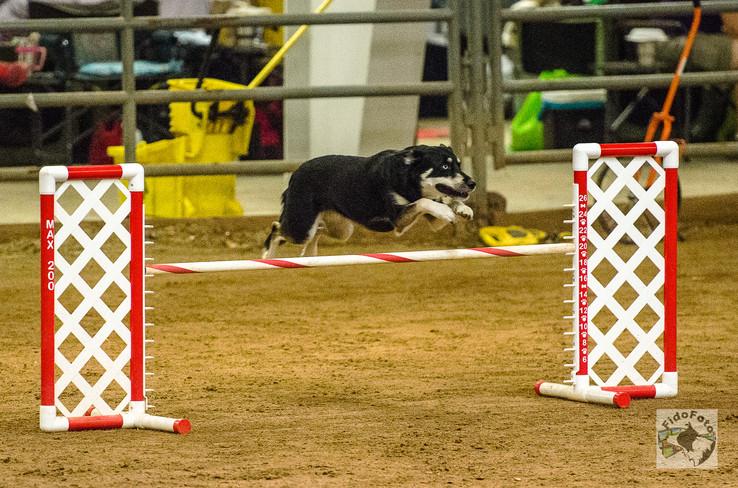 Piper Jump 2.jpg
