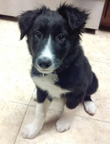 Diesel cute puppy 2.jpg