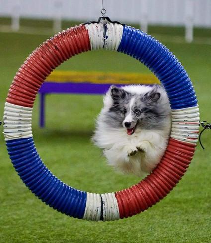 Parker Tire Jump.jpg