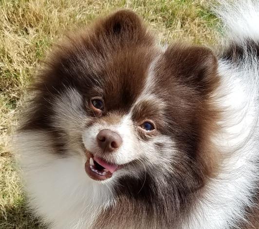 Roscoe cute sunshine.jpg