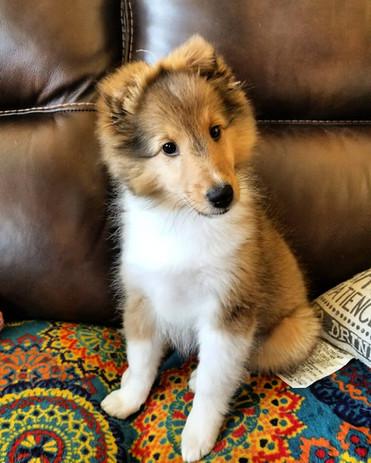 Chakra puppy couch.jpg