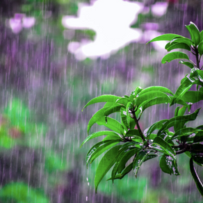 Monsoon food trends