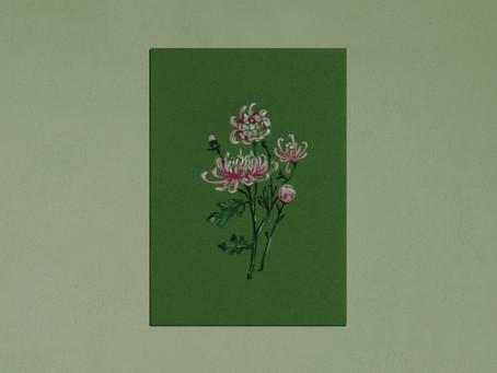 Birth Flower Colour Series