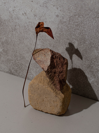 Flower And Rock