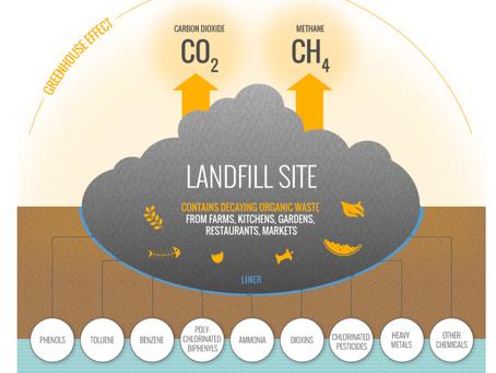 Confronting food waste: restaurants eliminating food waste