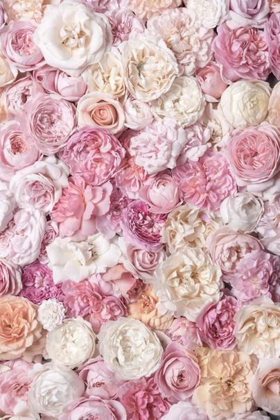 Fotografia Rosa Letto di Rose III Floral