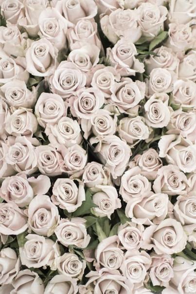 Paris Photograph - Cream Roses, Paris Fl