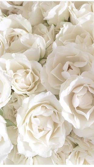 45 Beautiful Roses Wallpaper Backgrounds