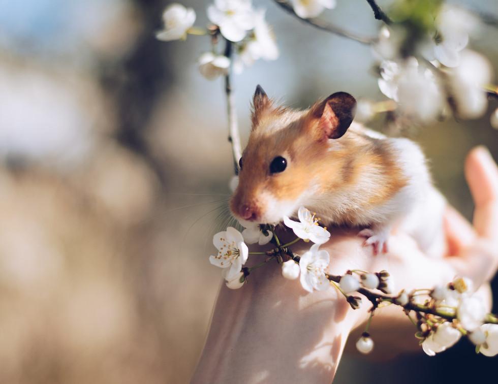 animal-bloom-blossom-2013665.jpg