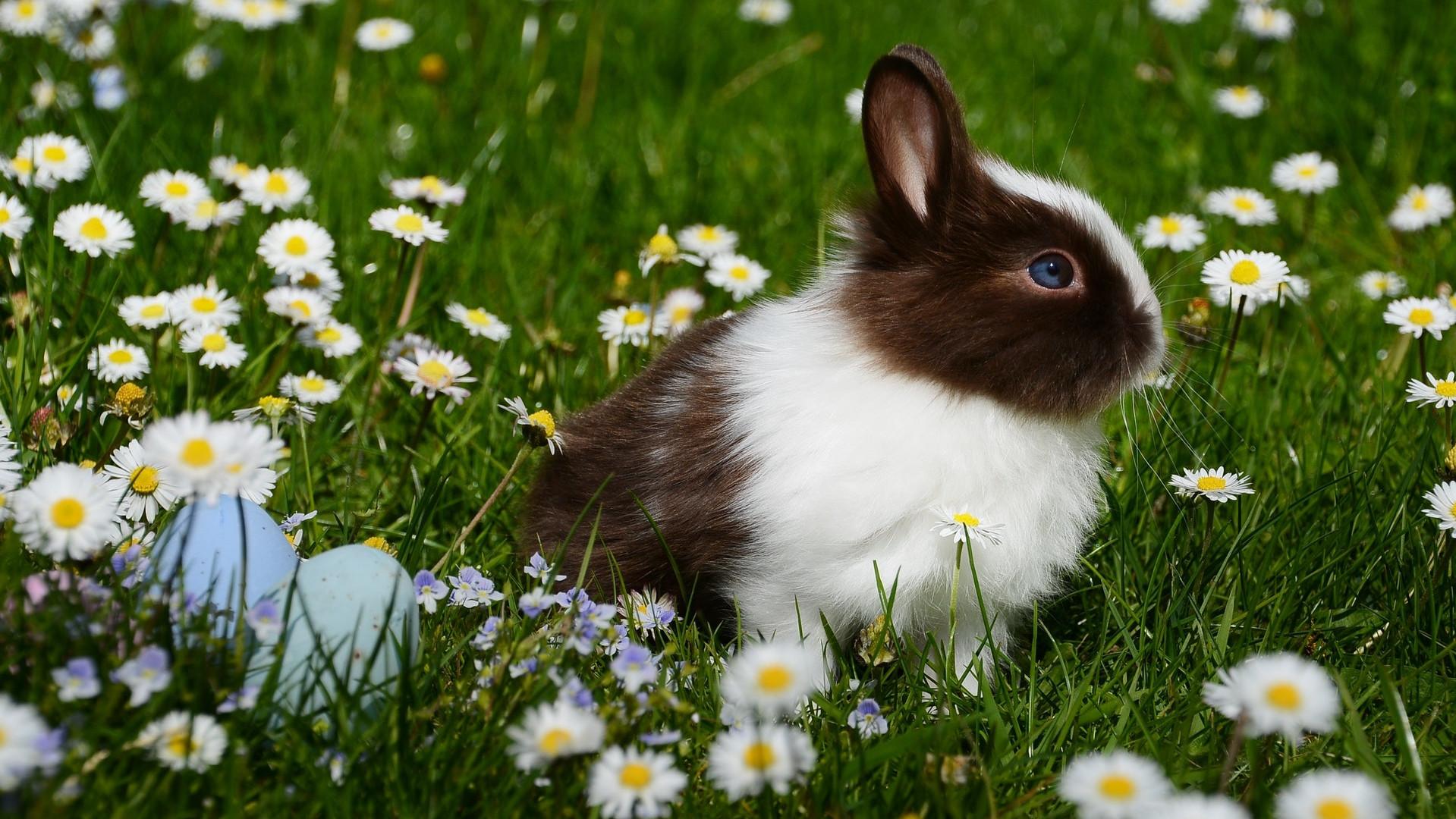 animal-bright-bunny-372166.jpg