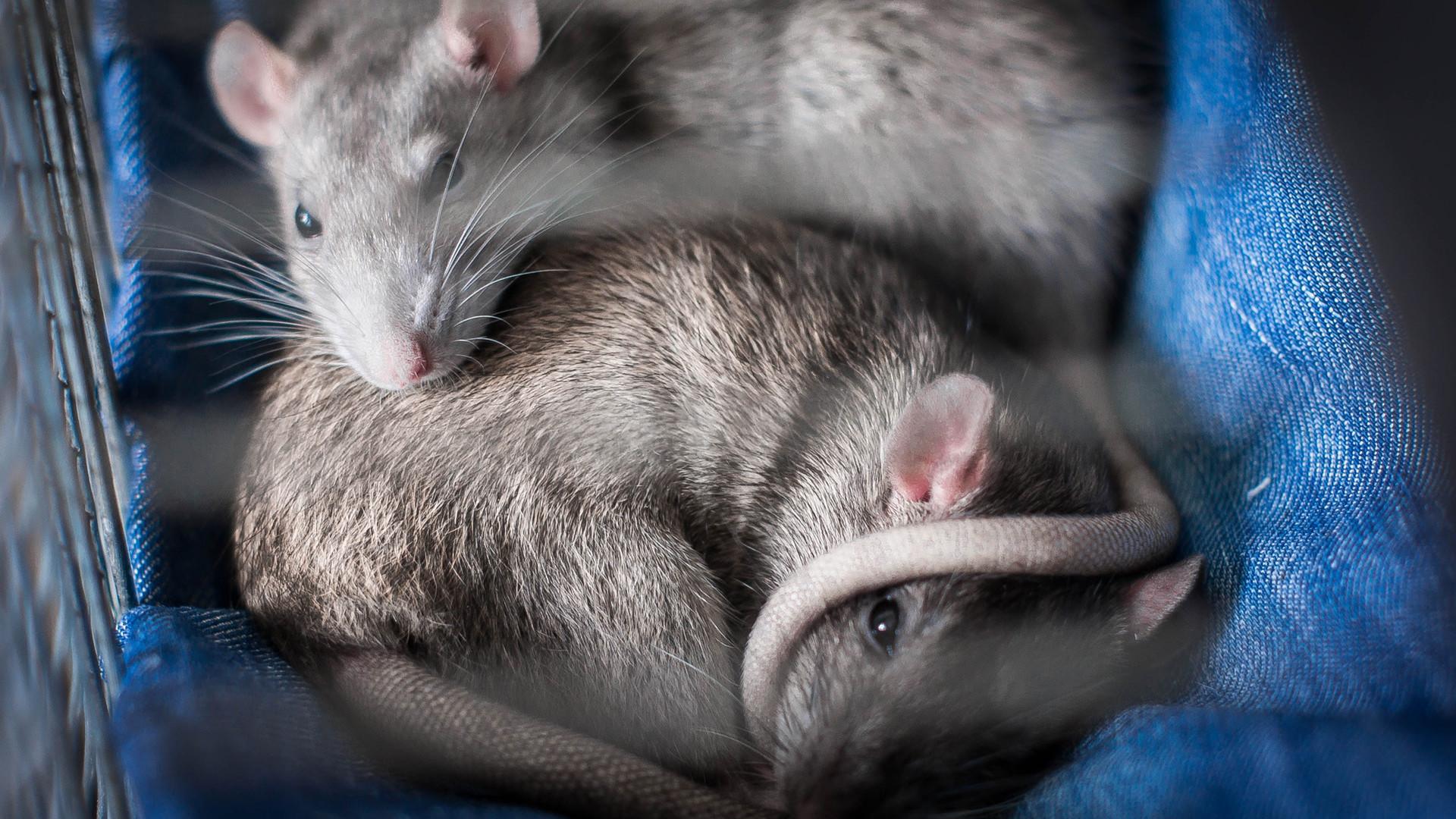 animals-asleep-cute-1051316.jpg