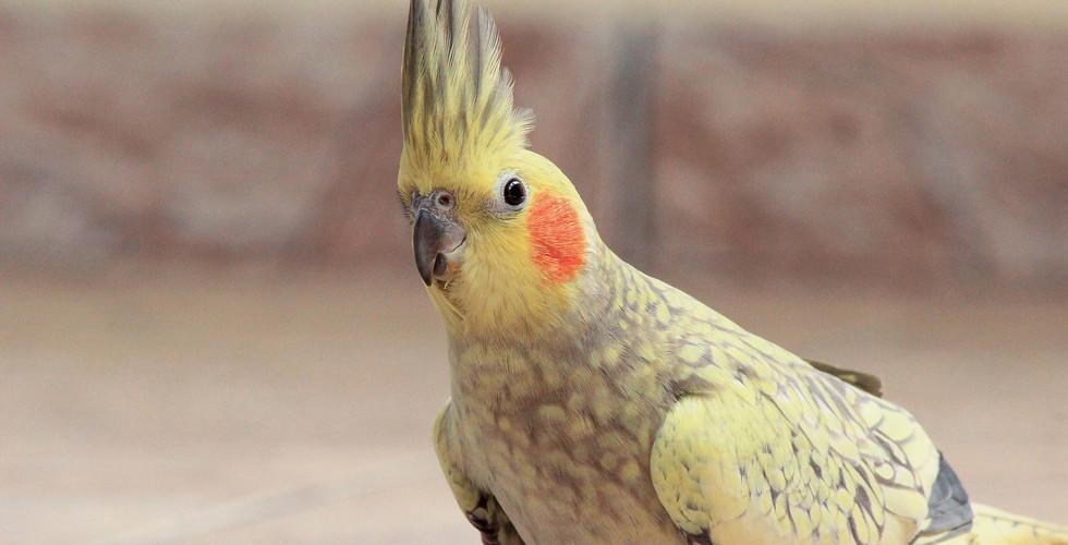 animal-beautiful-bright-1438130.jpg