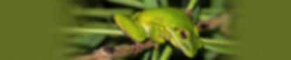frog-4-website2.jpg