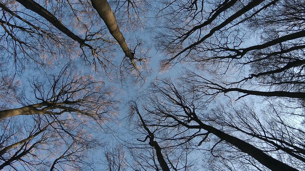 The Hidden Life of Trees © 2019 Constantin Film Verleih GmbH  nautilusfilm (1) Kopie.jpg