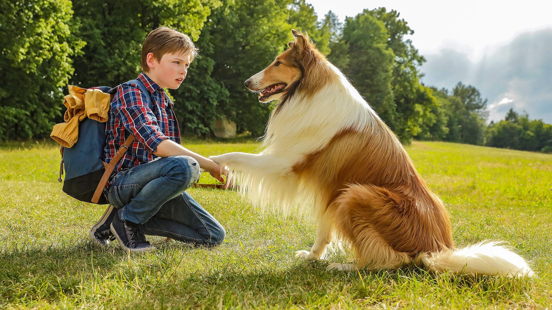 Lassie Come Home © 2019 LCH Film UG  War
