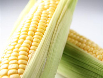 Brasil tem primeiro produto contra estresse hídrico do milho