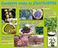 KOLAJ_VISHNA_edited.jpg