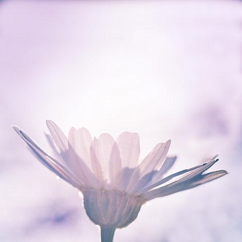 Flower Bathing in the Sun