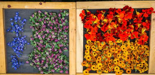 Nos belles fleurs.